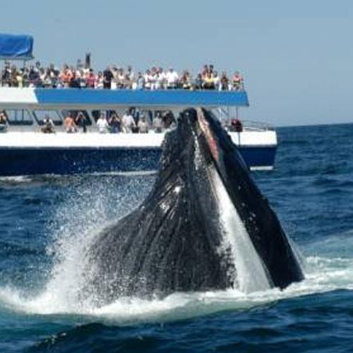 The Dolphin Fleet